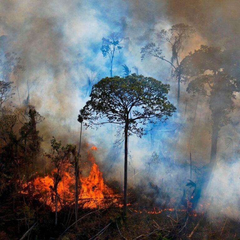 Abogados Internacionales Redactan Un Plan Para Criminalizar La Destrucción De Ecosistemas Biodiversidad En América Latina
